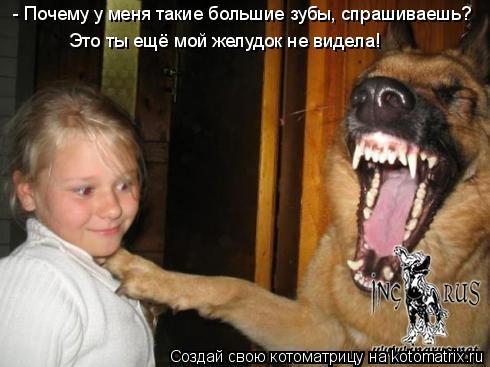 Котоматрица: - Почему у меня такие большие зубы, спрашиваешь? Это ты ещё мой желудок не видела!