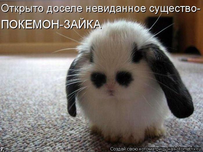 Котоматрица: Открыто доселе невиданное существо- ПОКЕМОН-ЗАЙКА