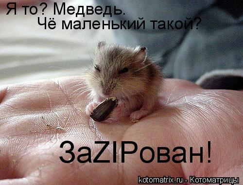 Котоматрица: Я то? Медведь. Чё маленький такой?  ЗаZIPован!