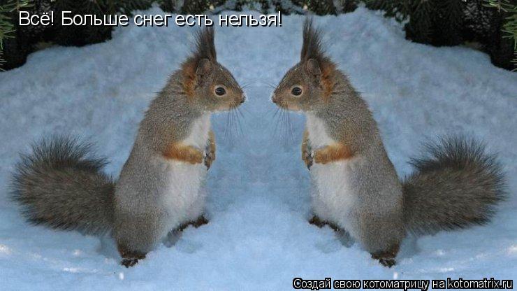 Котоматрица: Всё! Больше снег есть нельзя!