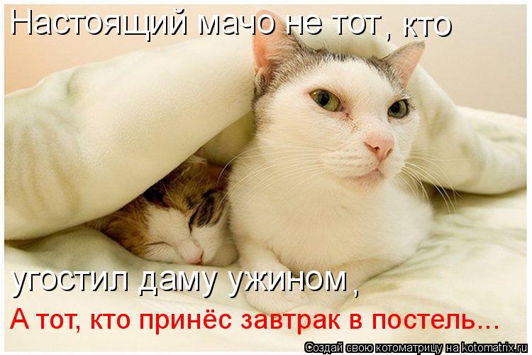 Котоматрица: Настоящий мачо не тот , кто угостил даму ужином А тот, кто принёс завтрак в постель... ,