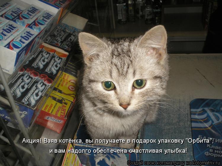 """Котоматрица: Акция! Взяв котёнка, вы получаете в подарок упаковку """"Орбита"""", и вам надолго обеспечена счастливая улыбка!"""