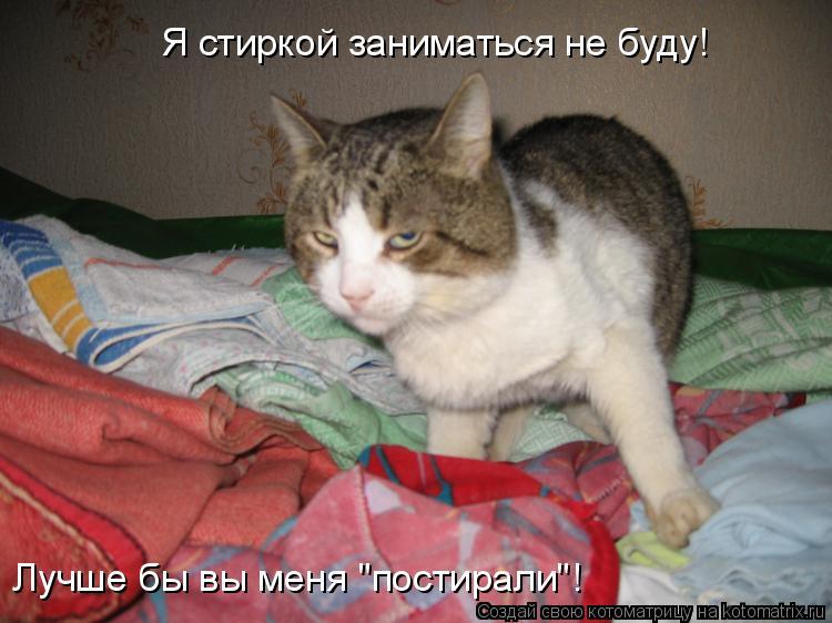 """Котоматрица: Я стиркой заниматься не буду! Лучше бы вы меня """"постирали""""!"""