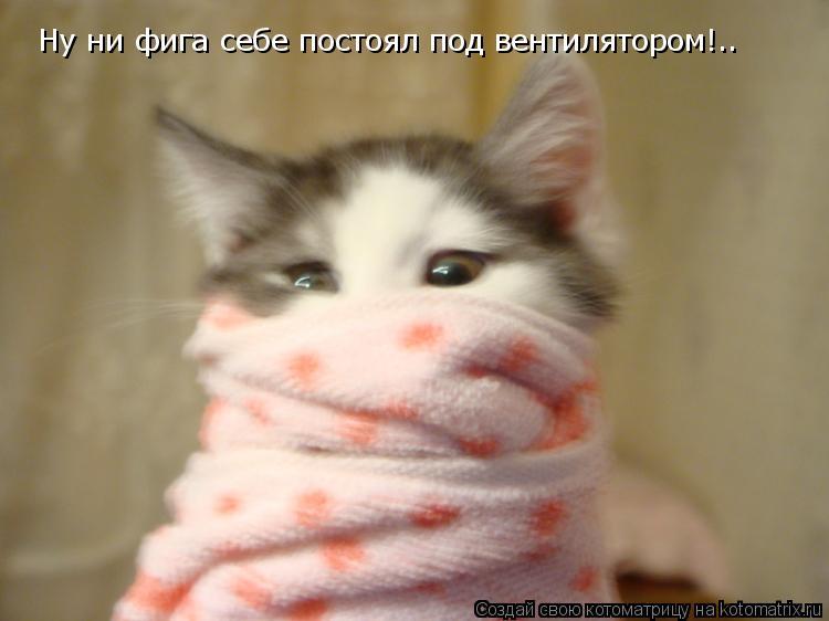 Котоматрица: Ну ни фига себе постоял под вентилятором!..