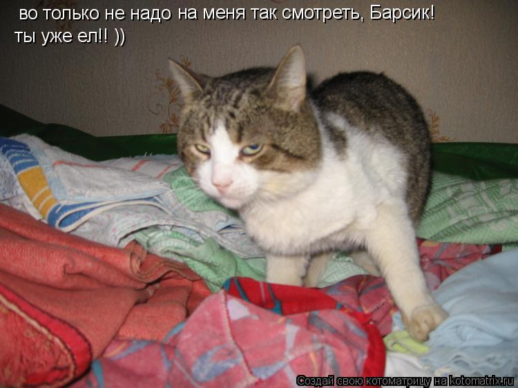 Котоматрица: во только не надо на меня так смотреть, Барсик!  ты уже ел!! ))