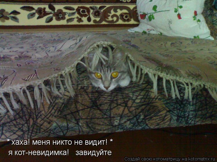 Котоматрица: * хаха! меня никто не видит! * я кот-невидимка!   завидуйте
