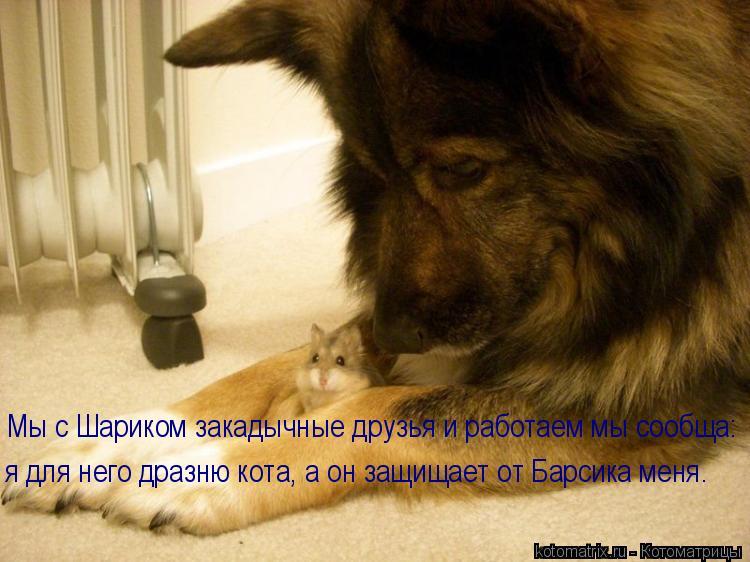 Котоматрица: Мы с Шариком закадычные друзья и работаем мы сообща: я для него дразню кота, а он защищает от Барсика меня.