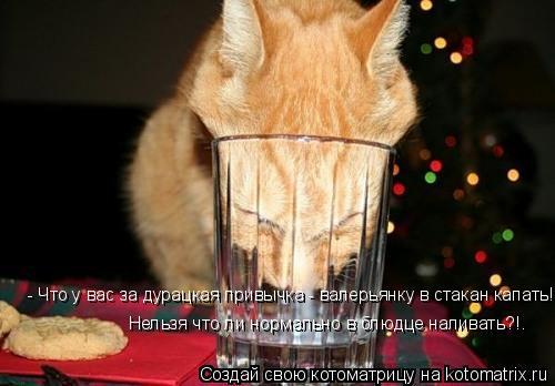 Котоматрица: - Что у вас за дурацкая привычка - валерьянку в стакан капать!.. Нельзя что ли нормально в блюдце наливать?!.