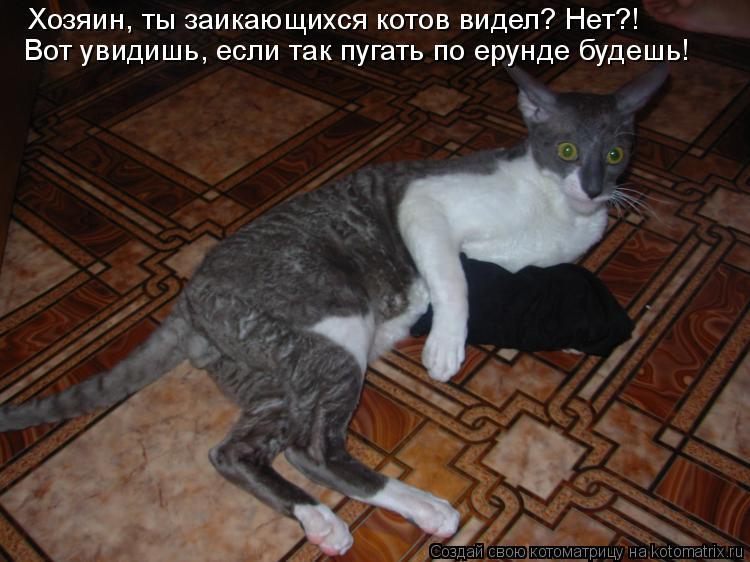 Котоматрица: Хозяин, ты заикающихся котов видел? Нет?! Вот увидишь, если так пугать по ерунде будешь!