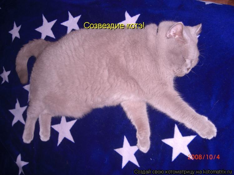Котоматрица: Созвездие котэ!