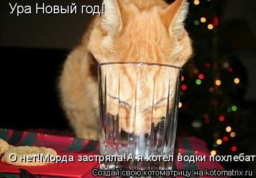 Котоматрица: Ура Новый год! О нет!Морда застряла!А я хотел водки похлебать