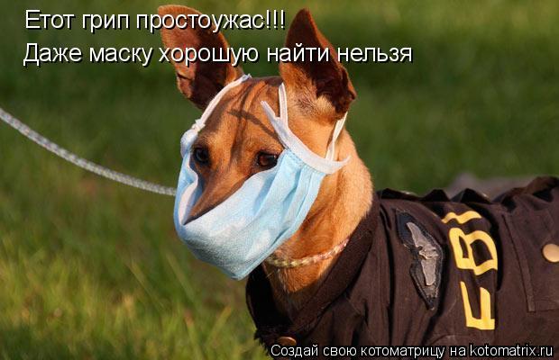 Котоматрица: Етот грип простоужас!!! Даже маску хорошую найти нельзя