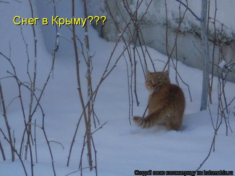 Котоматрица: Снег в Крыму???