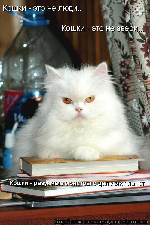 Котоматрица: Кошки - это не люди... Кошки - это не звери... Кошки - разумные монстры с далеких планет