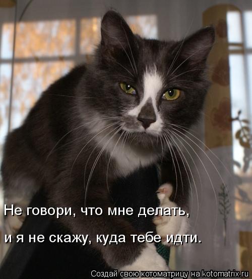 Котоматрица: Не говори, что мне делать, и я не скажу, куда тебе идти.