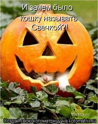 Котоматрица: И зачем было кошку называть Свечкой?!