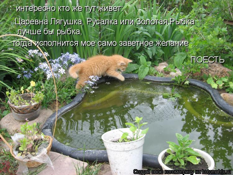 Котоматрица: интересно кто же тут живет: Царевна Лягушка, Русалка или Золотая Рыбка лучше бы рыбка,  тогда исполнится мое само заветное желание ... ПОЕСТЬ