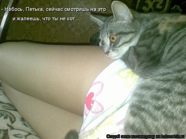 Котоматрица: - Небось, Петька, сейчас смотришь на это и жалеешь, что ты не кот...