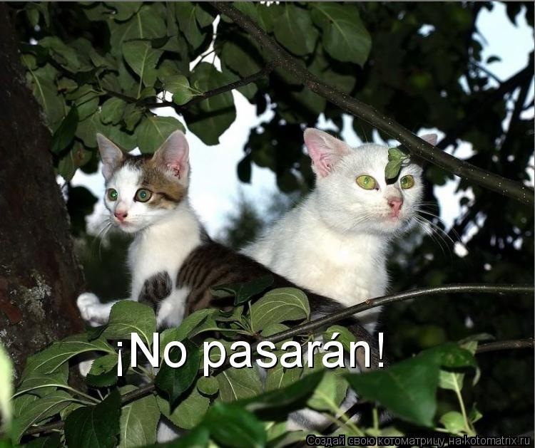 Котоматрица: ¡No pasarán!