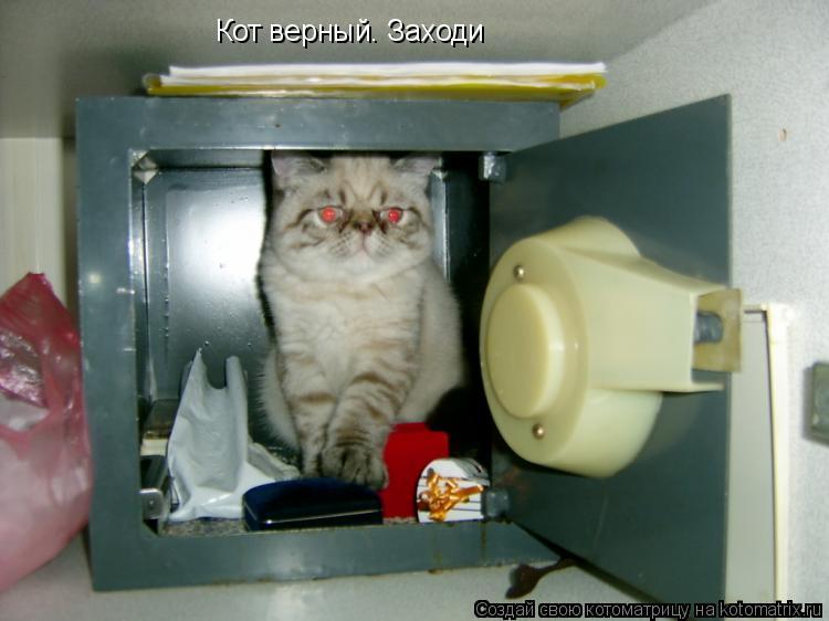 Котоматрица: Кот верный. Заходи