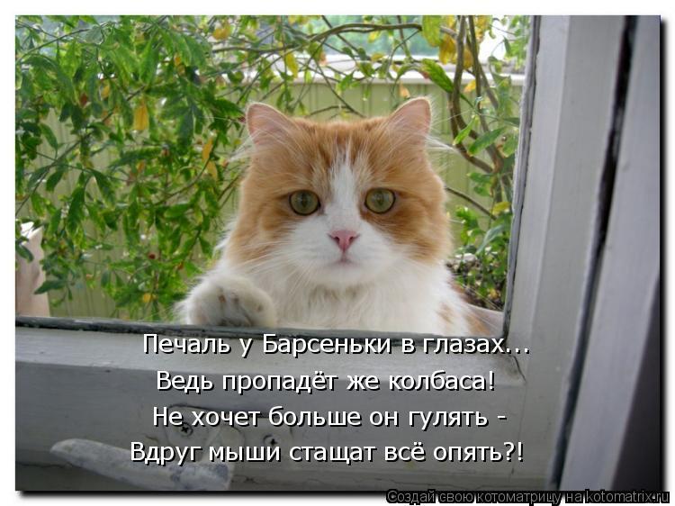 Котоматрица: Печаль у Барсеньки в глазах... Ведь пропадёт же колбаса!  Не хочет больше он гулять - Вдруг мыши стащат всё опять?!
