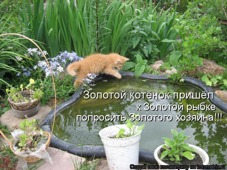 Котоматрица: Золотой котёнок пришёл к Золотой рыбке попросить Золотого хозяина!!!