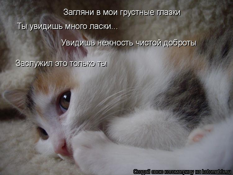 Котоматрица: Загляни в мои грустные глазки Ты увидишь много ласки... Увидишь нежность чистой доброты Заслужил это только ты
