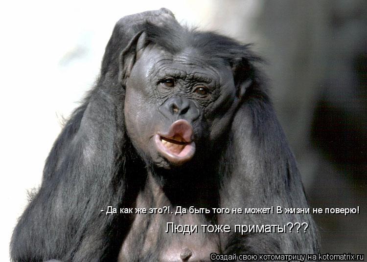 Котоматрица: - Да как же это?!. Да быть того не может! В жизни не поверю!  Люди тоже приматы???