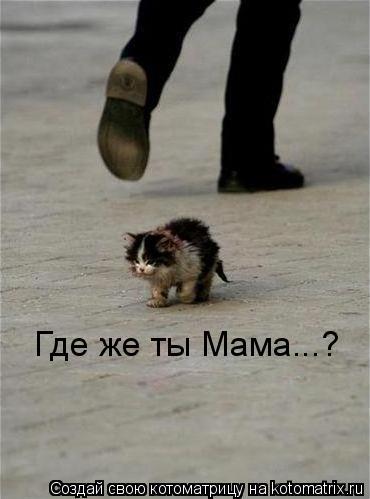 Котоматрица: Где же ты Мама...?