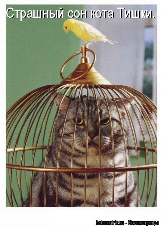 Котоматрица: Страшный сон кота Тишки.