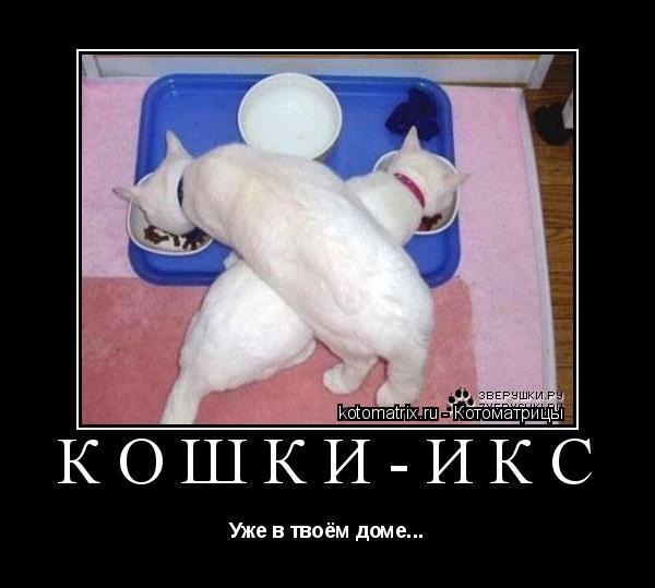 Котоматрица: Кошки-икс Уже в твоём доме...