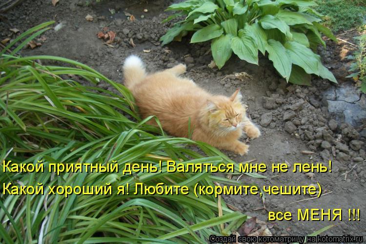 Котоматрица: Какой приятный день! Валяться мне не лень! Какой хороший я! Любите (кормите,чешите) все МЕНЯ !!!