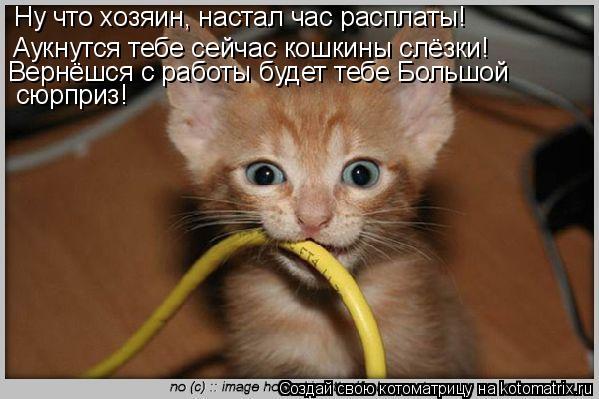Котоматрица: Аукнутся тебе сейчас кошкины слёзки! Вернёшся с работы будет тебе Большой  сюрприз! Ну что хозяин, настал час расплаты!