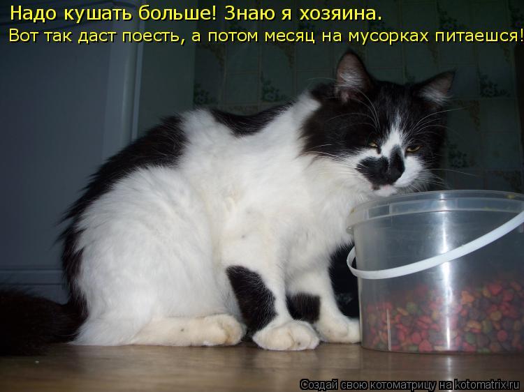 Котоматрица: Надо кушать больше! Знаю я хозяина.  Вот так даст поесть, а потом месяц на мусорках питаешся!!!