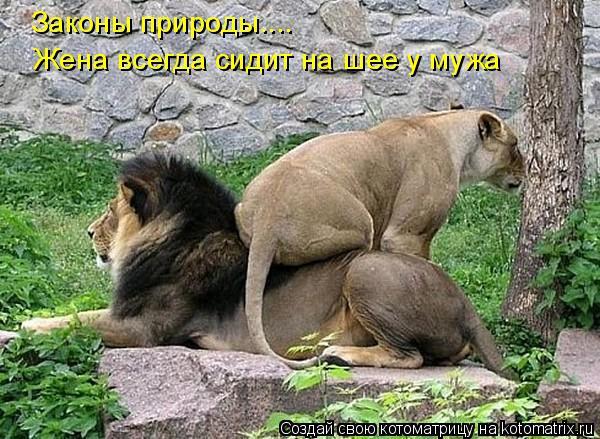 Котоматрица: Законы природы.... Жена всегда сидит на шее у мужа
