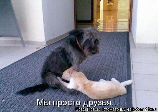 Котоматрица: Мы просто друзья...