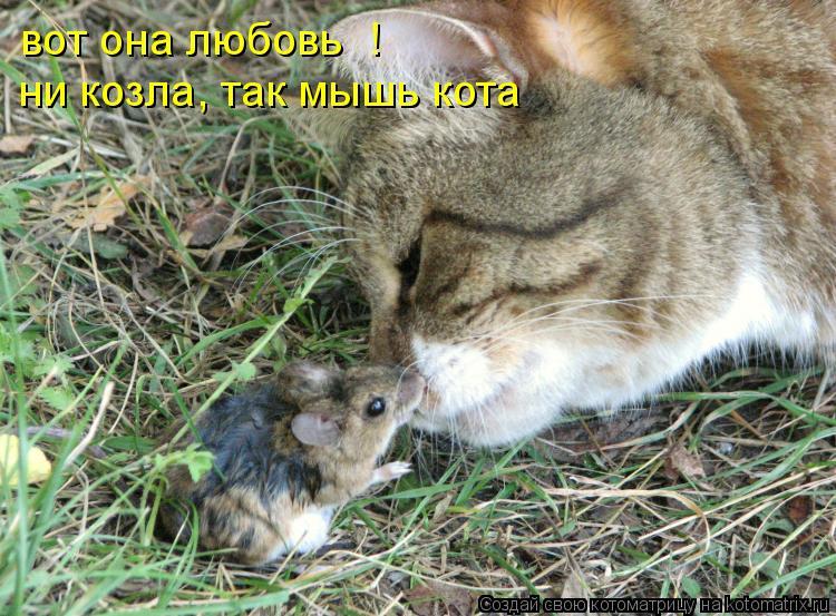 Котоматрица: вот она любовь  ! ни козла, так мышь кота