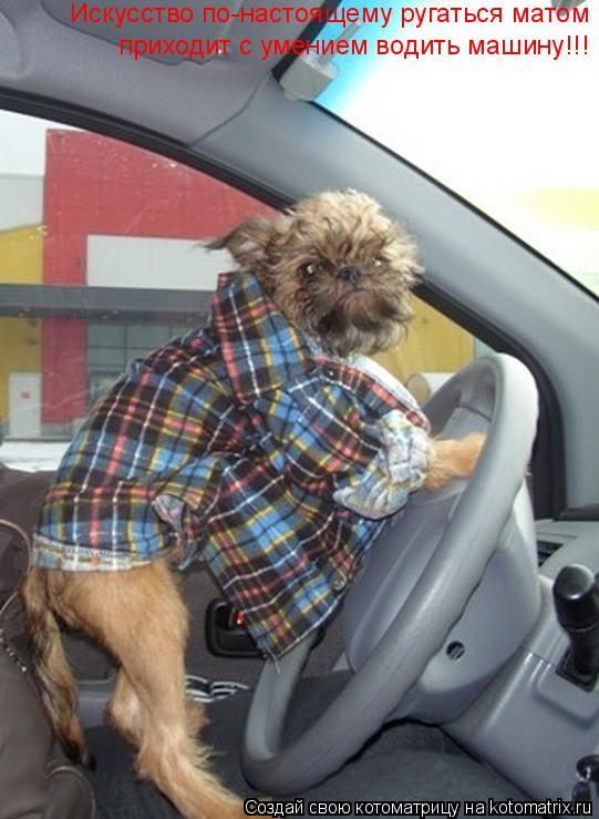 Котоматрица: Искусство по-настоящему ругаться матом  приходит с умением водить машину!!!