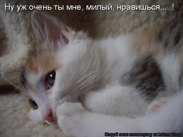 Котоматрица: Ну уж очень ты мне, милый, нравишься.... !