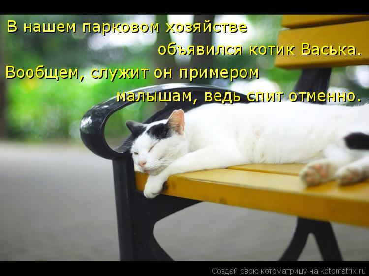 Котоматрица: В нашем парковом хозяйстве  объявился котик Васька. Вообщем, служит он примером малышам, ведь спит отменно.