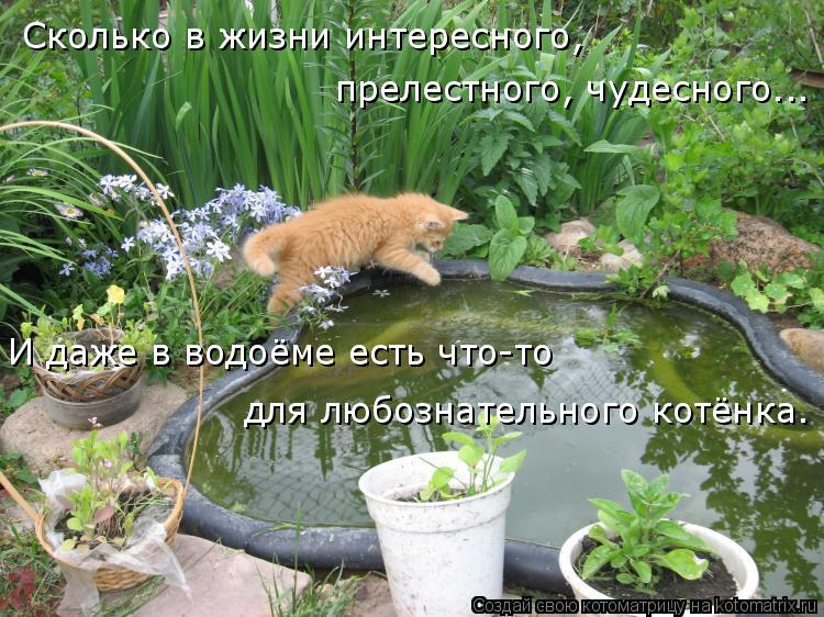 Котоматрица: Сколько в жизни интересного,  прелестного, чудесного... И даже в водоёме есть что-то для любознательного котёнка.