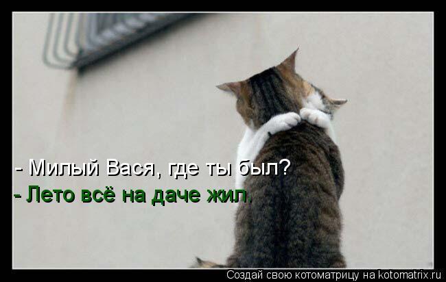Котоматрица: - Милый Вася, где ты был? - Лето всё на даче жил.