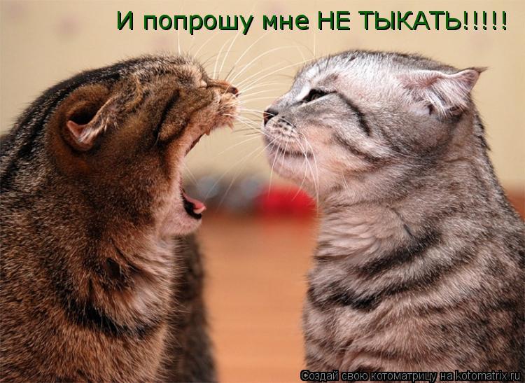 Котоматрица: И попрошу мне НЕ ТЫКАТЬ!!!!!
