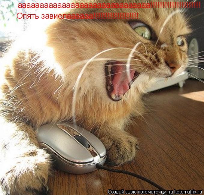Котоматрица: аааааааааааааааааааааааааааааа!!!!!!!!!!!!!!!!!!!!! Опять завислаааааа!!!!!!!!!!!!!!!!!!!