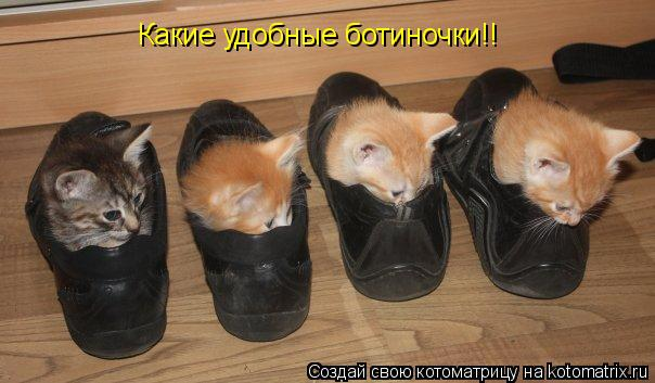 Котоматрица: Какие удобные ботиночки!!