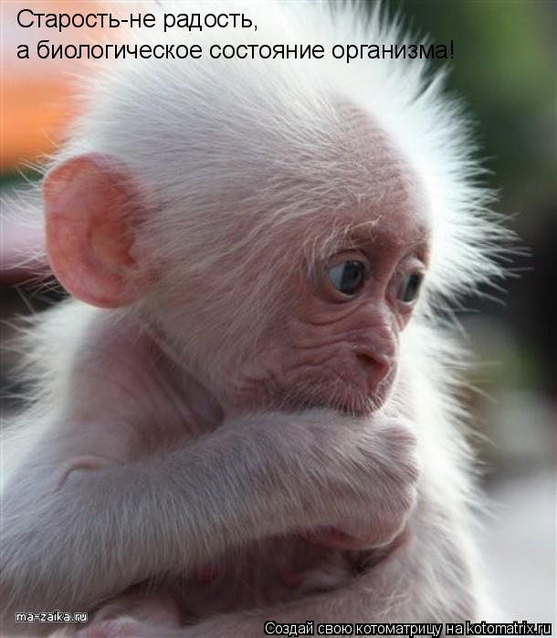Котоматрица: Старость-не радость, а биологическое состояние организма!