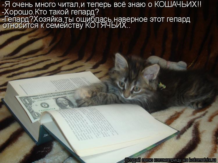 Котоматрица: -Я очень много читал,и теперь всё знаю о КОШАЧЬИХ!! -Хорошо.Кто такой гепард? -Гепард?Хозяйка,ты ошиблась,наверное этот гепард  относится к се