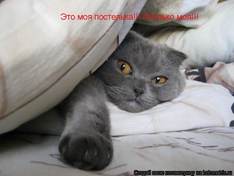 Котоматрица: Это моя постелька!!! Итолько моя!!!