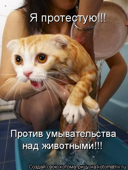 Котоматрица: Я протестую!!! Против умывательства над животными!!!