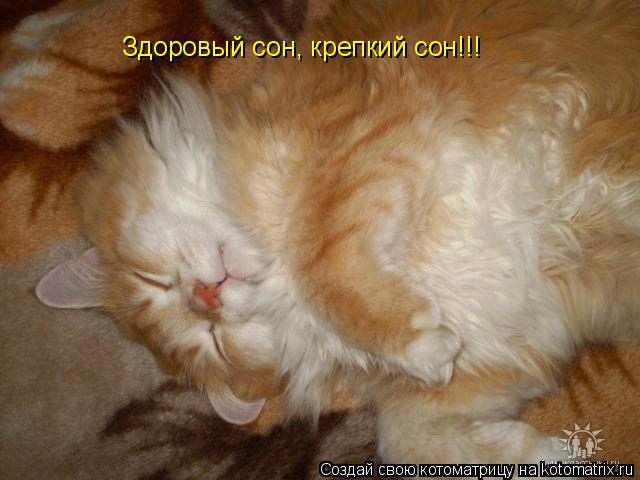 Котоматрица: Здоровый сон, крепкий сон!!!